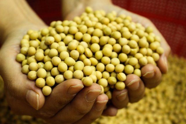 Planter des légumineuses après les pommes de terre