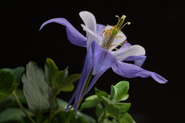 durée de conservation des graines de fleurs