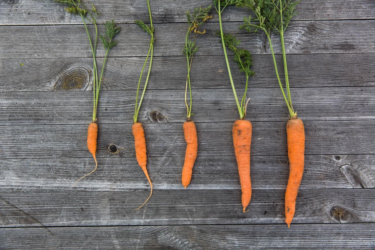 caractéristiques des carottes