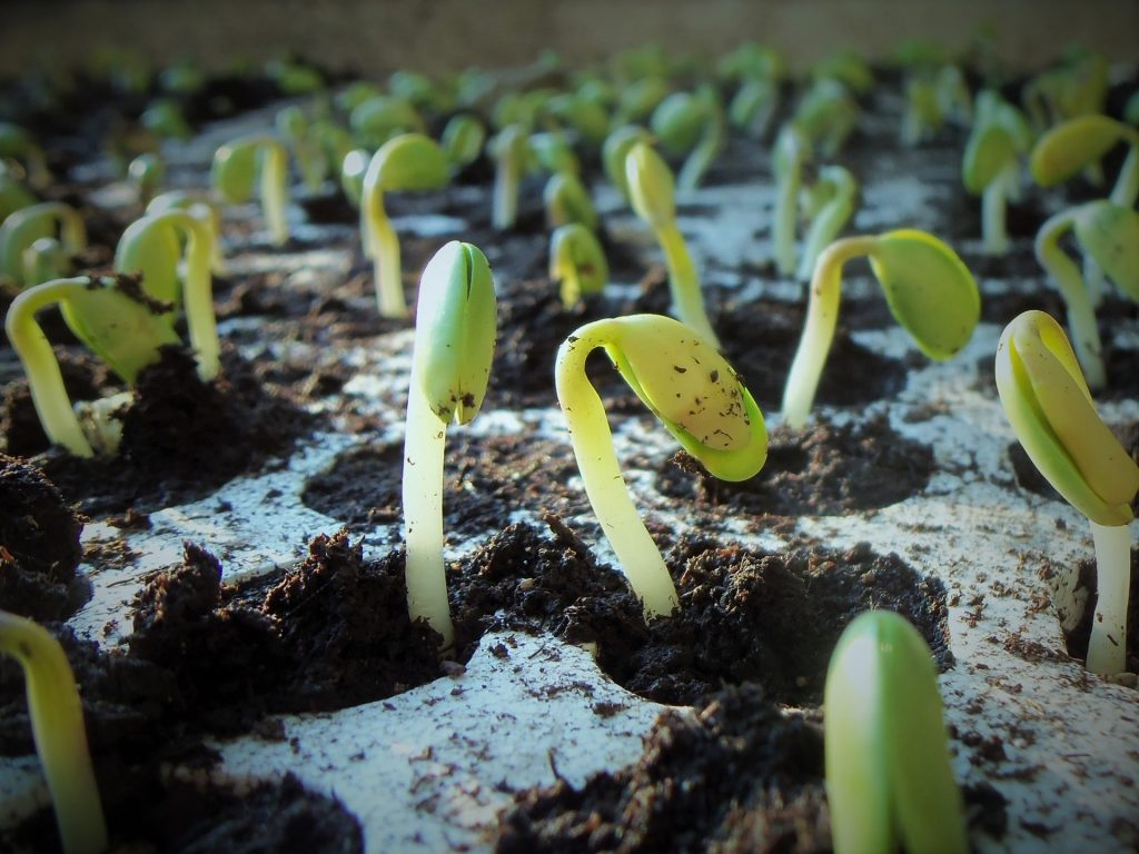test de germination