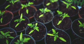 Comment faire ses semis en intérieur